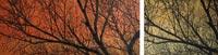 Tarde de otoño | 120x30 | Técnica mixta sobre DM